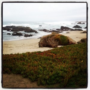 Mendocino Coast